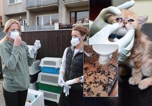 Majitelka 56 koček z mučírny v Neratovicích  Budu je chtít vrátit! 1431da53fa