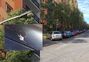 Na Ládví se umísťují bodce proti ptactvu. Na sloupech mají zabránit tomu, aby holubi káleli na auta.