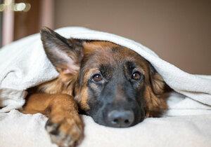 Věděli jste, že podzimními depresemi trpí i psi a kočky?