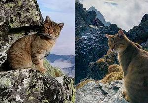 Tatranský kocour se stal hitem internetu. Po jeho neobvyklých výletech po dvoutisícovkách se ho ujal slovenský chatař Viktor.