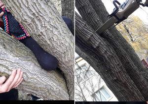 Holčičce v Plzni uvízla noha ve stromě: Hasiči použili rozpínák a dostali ji ven