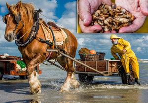 Rybáři by rádi, kdyby jejich činnost uznalo UNESCO jako raritu a přispělo na uchování tohoto řemesla, které je jinak odsouzeno k pomalému vymření.