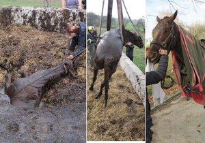 Kůň utekl ze stájí a uvízl v septické jámě! Ven ho dostali hasiči