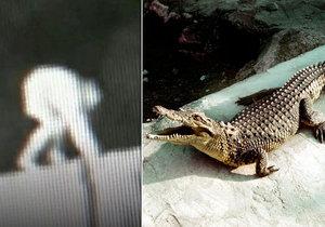 Muž vlezl do výběhu krokodýlů. Jeden z plazů ho pokousal.