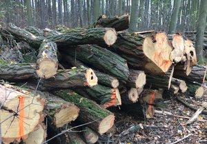 Mezi Modřany a Kamýkem se budou kácet stromy. Lidé mají dávat pozor