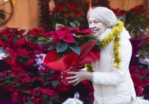 Víte, které z pokojových rostlin byste stejně jako vánoční hvězdu měli dát z dosahu dětí a doomácích mazlíčků?