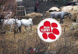 Farma hrůzy v Číčovicích: Kozy na balkóně a dům plný zbídačených zvířat!