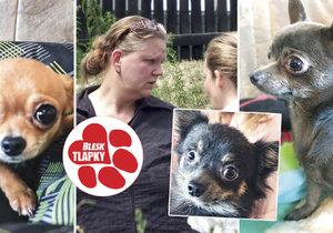 Psi, které podle policie týrala Iva Wastová, už našli domov.
