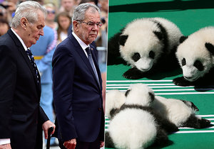 Prezident Miloš Zeman Čínu o pomoc s pandami nežádal. Rakušan Van der Bellen ano.