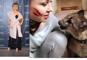 Kaira Hrachovcová se střetla s pumou: Krvavé šrámy přes celou tvář!
