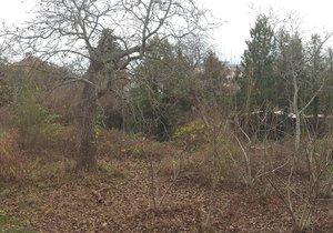 V Modřanech vzniká komunitní zahrada. Hledá nové zájemce o pěstování
