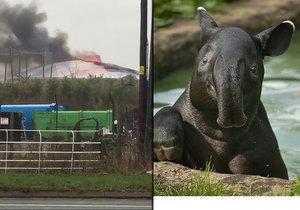 Při sobotním požáru zoologické zahrady v anglickém Chesteru uhynulo několik zvířat. Nepodařilo se zachránit žáby, ryby a malé druhy ptáků. Oheň zničil také pavilon krokodýlů a opic. Všechny orangutany, gibbony a krokodýly se ale podařilo zachránit.