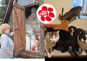 Zvířecí máma ze Šumperska: Jiřina sdílí svůj domek se 120 kočkami. Profesionální azyl!