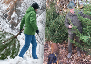 Lesníci před Vánoci drží hlídky i v noci. (Ilustrační foto)
