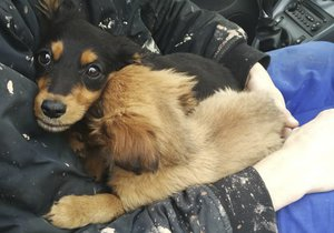 Psy někdo vyhodil z jedoucího auta. Zachránila je pohotová řidička.