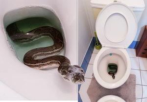 """""""Nejhorší noční můra."""" Muž šel doma na záchod, číhala v něm krajta"""