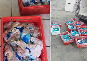 Veterináři zadrželi na Olomoucku 300 kilo závadného masa: Pach, špína a modrá barva!