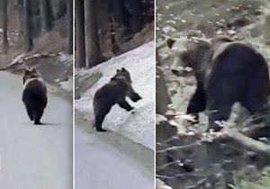 Medvěd běhal po silnici u obce Visalaje poblíž Lysé hory.