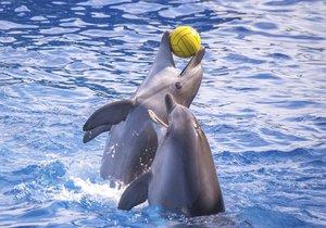 Delfíni drženi ve vodních parcích mají za sebou zlou psychickou újmu