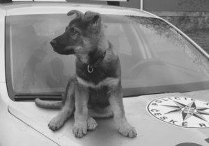 Snídaňové štěně Ozzy zemřelo.
