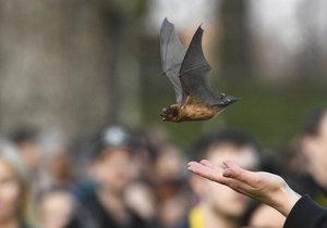 Ve Stromovce vypustili do přírody přes 50 netopýrů. Přihlížely stovky lidí
