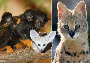 Hvězdy ze zoo: Roztomilá jarní nadílka přinesla nové chlupaté celebrity!