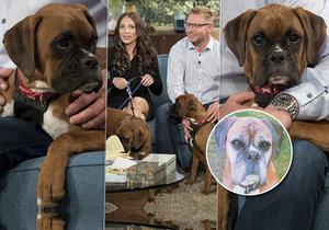 """Richardovi """"oživili"""" psa po 5 měsících! Zaplatil dva miliony"""