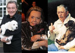 Jaké slavné celebrity neodolaly smutným psím očím?