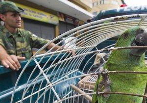 Papoušek držel pevně zavřený zobák, policii o svém majiteli nic neprozradil (ilustrační foto.)