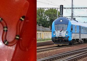 Panika ve vlaku v Českých Budějovicích: Cestující vyděsil had!