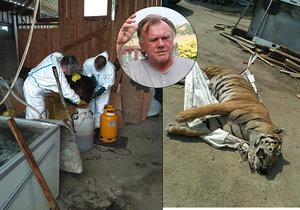 Kauza tygřích jatek spěje k závěru: Berousek vinu odmítá, všech 200 zvířat chce nabídnout státu!