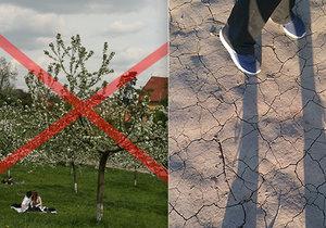"""Konec ovocným stromům? Ohrožuje je sucho i """"lenost"""" pěstitelů"""