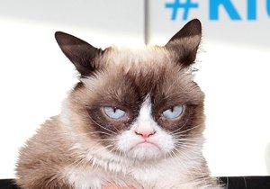 Nejslavnější kočka světa Grumpy Cat zemřela. Osudnou se jí stala infekce močových cest.