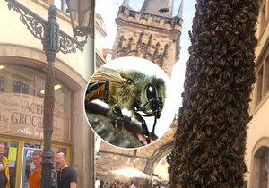 """Kolemjdoucí Pražané i turisté mohli v neděli vidět zajímavý úkaz. Včelí roj vzal totiž """"útokem"""" jeden z pouličních kandelábrů."""