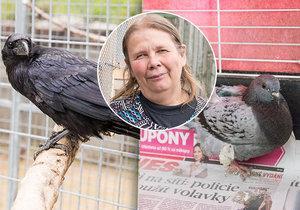 Padesát let se zvířaty: Věra se stará o pražskou handicapovanou drobotinu