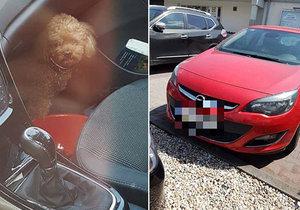 Žena zamkla psa v autě a šla nakupovat.