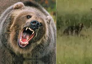 Medvěd na Valašsku (levá část snímku je ilustrační)