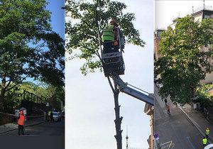 Z rostlých a košatých stromů v průběhu pátečního kácení v ulici Na Smetance příliš nezbylo.