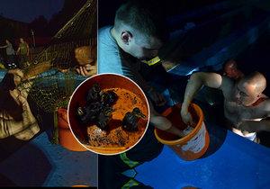 Hasiči zachraňovali v Klimkovicích kachňata, která se cachtala v tamní vodní nádrži.