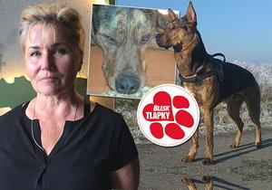 E. M. Baco zkrotila zlého psa. Stálo ji to spoustu fyzických a duševních sil, ale také krve.