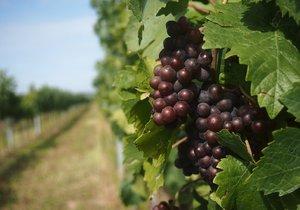 Vinařství se dodnes pojí s mnoha tradicemi.