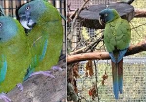 Majitel z Pardubicka hledá vzácného papouška