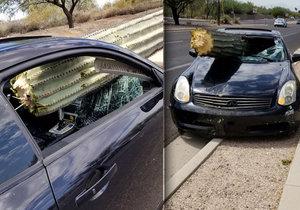 Bizarní nehoda: Řidič (39) se srazil s kaktusem! Obří rostlina mu prolítla předním oknem
