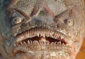 Nebezpečná ryba útočila na španělských plážích.