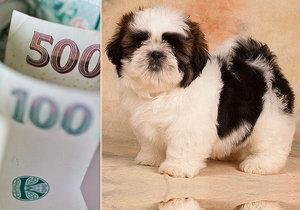 Krutý podvod: Žena zaplatila za štěně kamerunské bance 65 000