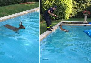Hasiči zachraňovali srnce z bazénu rodinného domku ve Slezské Ostravě.