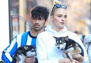 Joe Jonas a Sophie Turnerová přišli o pejska.