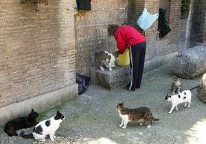 To se důchodkyni nevyplatilo, za krmení toulavých koček skončila na 10 dní za mřížemi, (ilustrační foto).