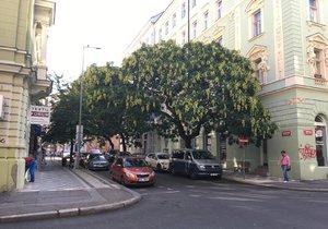Praha plánuje do konce roku 2019 vysázet přes 186 tisíc stromů. (ilustrační foto)