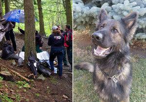 Pes Majk vyčuchal v Hodoníně ztracenou dvouletou holčičku i seniora, který zabloudil v Radějovské oboře.